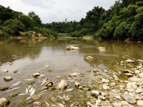 Thanh Hóa: Cá tự nhiên lại chết trắng xác trên sông Âm - Ảnh 2