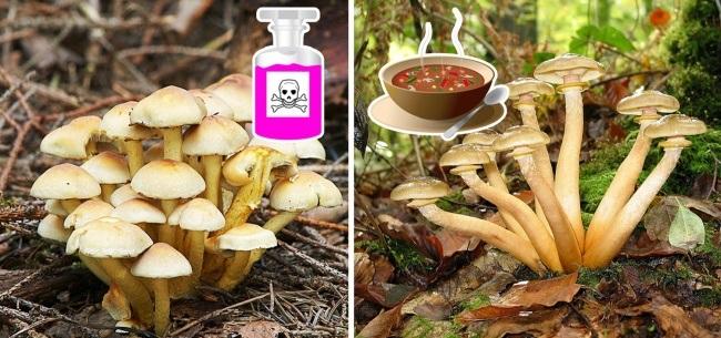 8 loại thực phẩm có thể gây hại đến sức khỏe của bạn - Ảnh 3