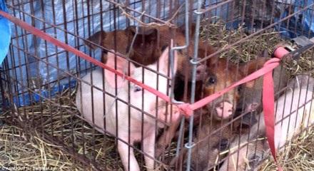 Sốc: Bé trai 7 tuổi bị cha và mẹ kế hành hạ đến chết, đem xác cho lợn ăn - Ảnh 7