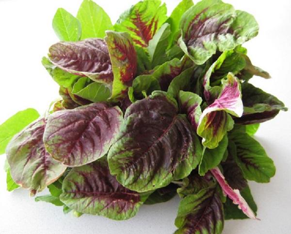 Ăn những loại rau củ này hàng ngày, cả đời không phải lo bệnh tiểu đường - Ảnh 2