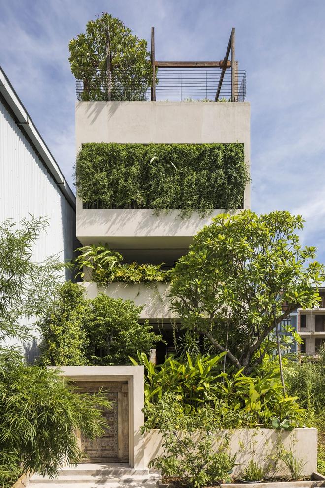 Ngôi nhà ở thành phố với mặt tiền xanh mướt - Ảnh 1