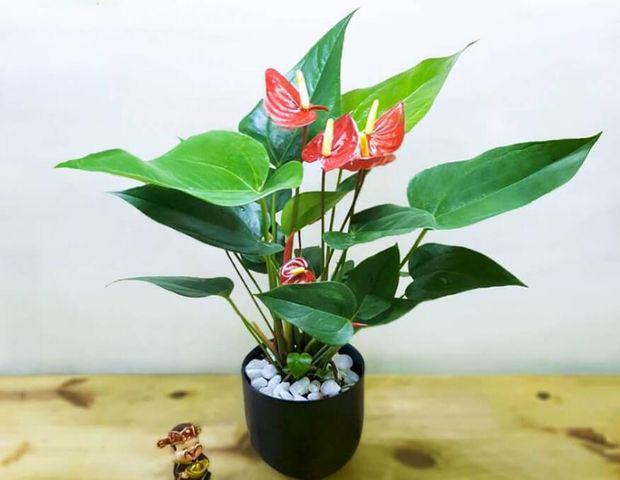 Những cây có hại cho sức khỏe nhưng nhiều người thích trồng, biết để ngừa kẻo 'rước họa' - Ảnh 8