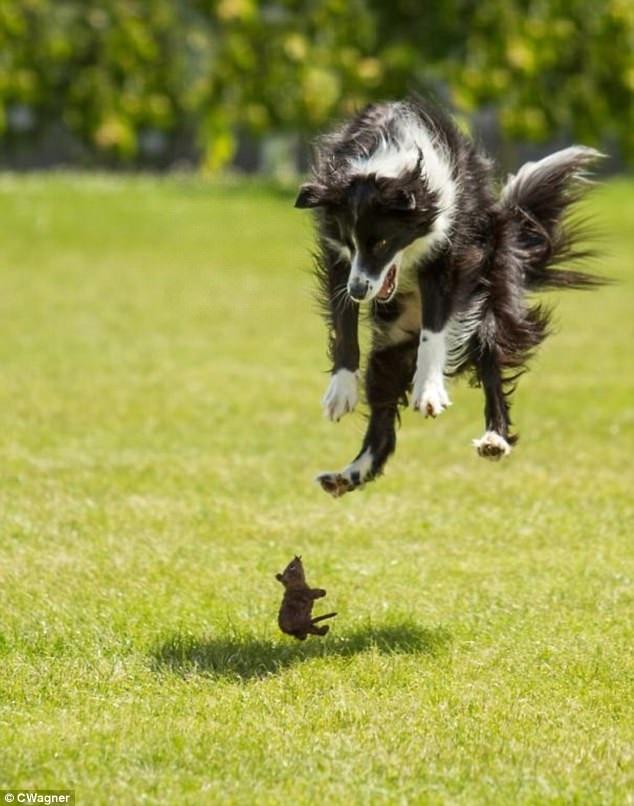 Cười 'đứt cả hơi' với những khoảnh khắc để đời của bọn cún lầy lội - Ảnh 16