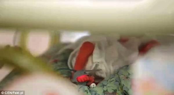 Chuyện ly kỳ về những đứa trẻ chào đời khỏe mạnh từ cơ thể người mẹ đã chết - Ảnh 5