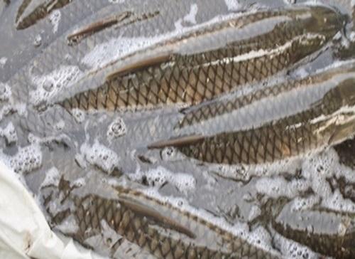 Những sai lầm nghiêm trọng khi ăn cá 99% con người mắc phải - Ảnh 1