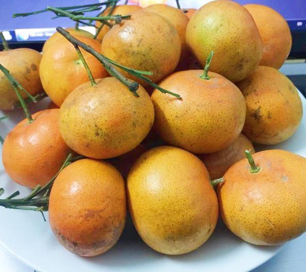 Cách chọn cam Canh ngon, ngọt trăm quả như một - Ảnh 1