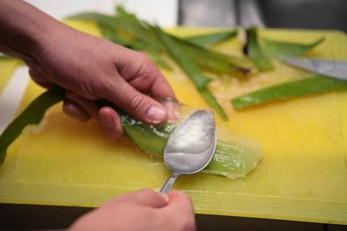 Cạo lấy gel nha đam làm đẹp da mặt hiệu quả