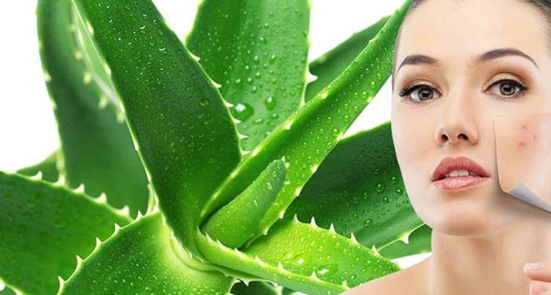 Cách làm đẹp từ lá nha đam trị mụn và làm trắng da nhanh trong 1 tháng