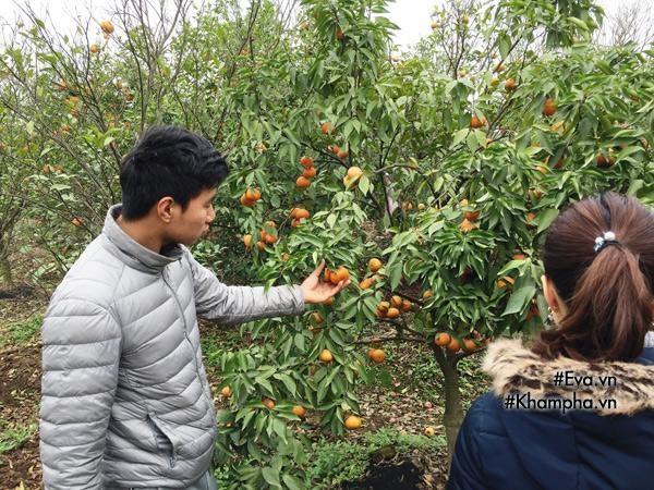 Cách phân biệt cam Canh chuẩn với cam Canh Trung Quốc - Ảnh 2