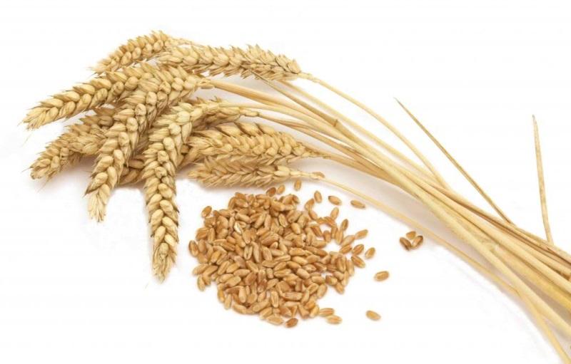Mẹo thử thai thời xưa: Chỉ cần vài hạt lúa mì, lúa mạch biết ngay kết quả, thậm chí tường tận cả giới tính thai nhi - Ảnh 1