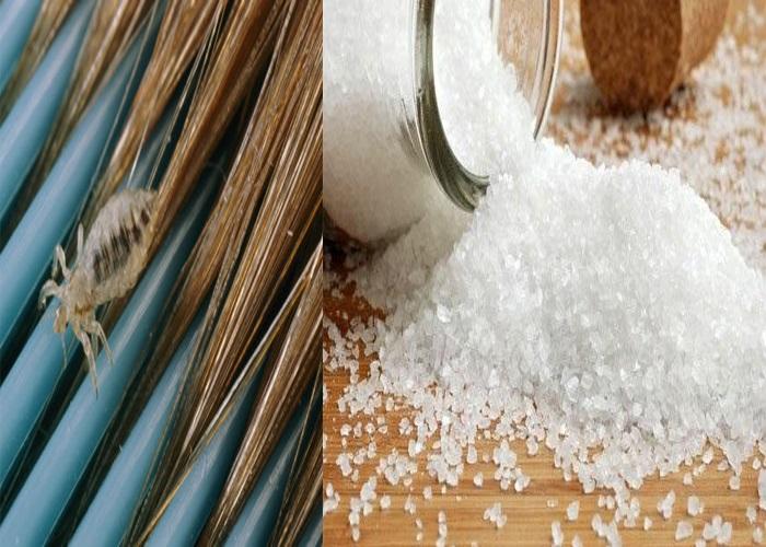 Cách trị chấy nhanh nhất tại nhà bằng muối hạt