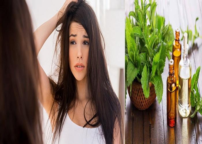 Cách trị gàu hiệu quả cho nữ bằng tinh dầu bạc hà