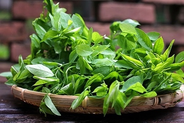 Cách trồng rau ngót trong thùng xốp cực đơn giản, rau xanh mơn mởn hái mỏi tay không hết - Ảnh 1
