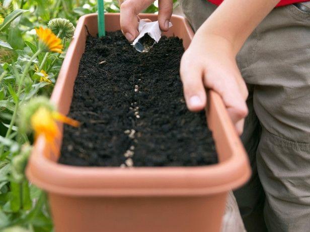 Cách trồng rau xà lách trong thùng xốp cực nhanh, ăn quanh năm không hết - Ảnh 2