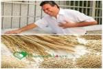 Muốn giảm nguy cơ bệnh tim mạch, hãy dùng ngay ngũ cốc nguyên hạt