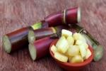 11 lợi ích tuyệt vời của cây mía đường đối với sức khỏe