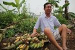 Vụ chặt phá vườn chuối ở Hải Phòng: Cơ quan công an khẳng định không có việc bao che cho các đối tượng