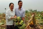 Ban Nội chính Hải Phòng đề nghị khởi tố vụ côn đồ phá vườn chuối