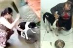 Chú chó bị chặt chân ở Phú Quốc được giải cứu, có chủ mới, sắp phẫu thuật: Hé lộ những uẩn khúc bên trong khiến ai cũng xót xa