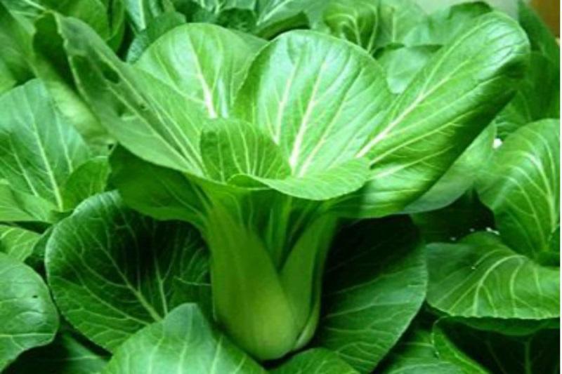 Chuyên gia khuyến cáo cảnh giác với các loại rau dễ dính thuốc và kim loại nặng - Ảnh 3