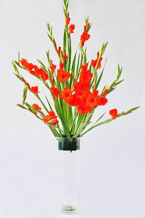 Cắm hoa lay ơn tạo dáng hình rẻ quạt là đạt yêu cầu