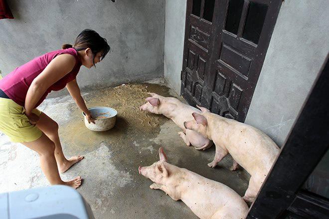 Cận cảnh cuộc sống 'người lợn chung nhà' của người dân Hà Nội sau vỡ đê Chương Mỹ - Ảnh 2