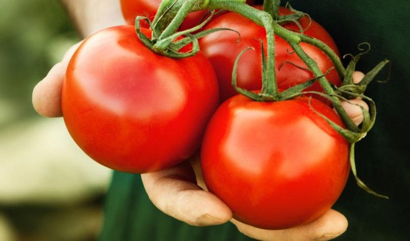 Cà chua là một trong những loại quả mang lại hiệu quả cao trong việc chống lão hóa, duy trì độ tươi trẻ cho làn da - Ảnh: Internet