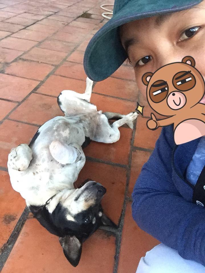 Chú chó bị chặt chân ở Phú Quốc được giải cứu, có chủ mới, sắp phẫu thuật: Hé lộ những uẩn khúc bên trong khiến ai cũng xót xa - Ảnh 2