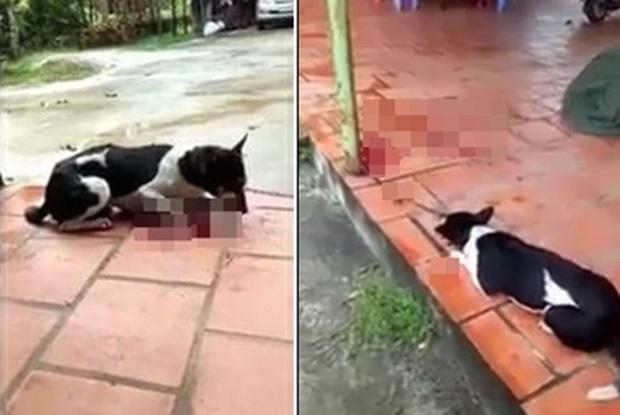 Clip sốc: Người phụ nữ thản nhiên chặt lìa chân chú chó đang còn sống - Ảnh 2