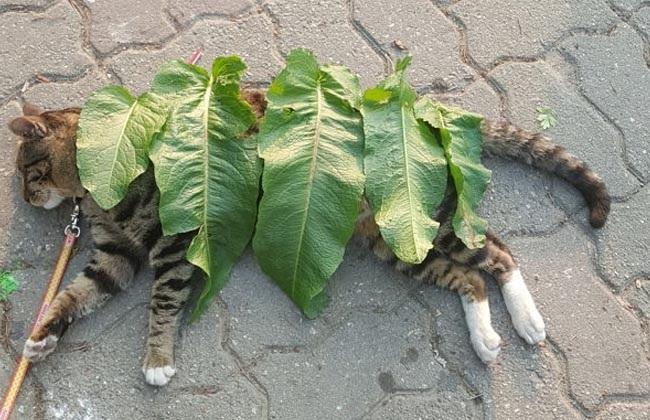 Cô bé 'đắp chăn' cho em mèo nằm ngủ giữa đường cực đáng yêu