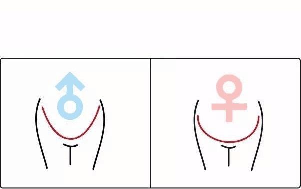 Hình dáng bụng bầu do nhiều yếu tố quyết định và không liên quan giới tính thai nhi