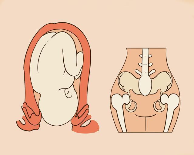Hình thái và độ rộng của xương chậu cực kỳ quan trọng để em bé thuận lợi chào đời