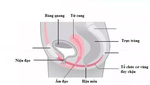 Phụ nữ sau sinh con thường gặp vấn đề về cơ đáy chậu