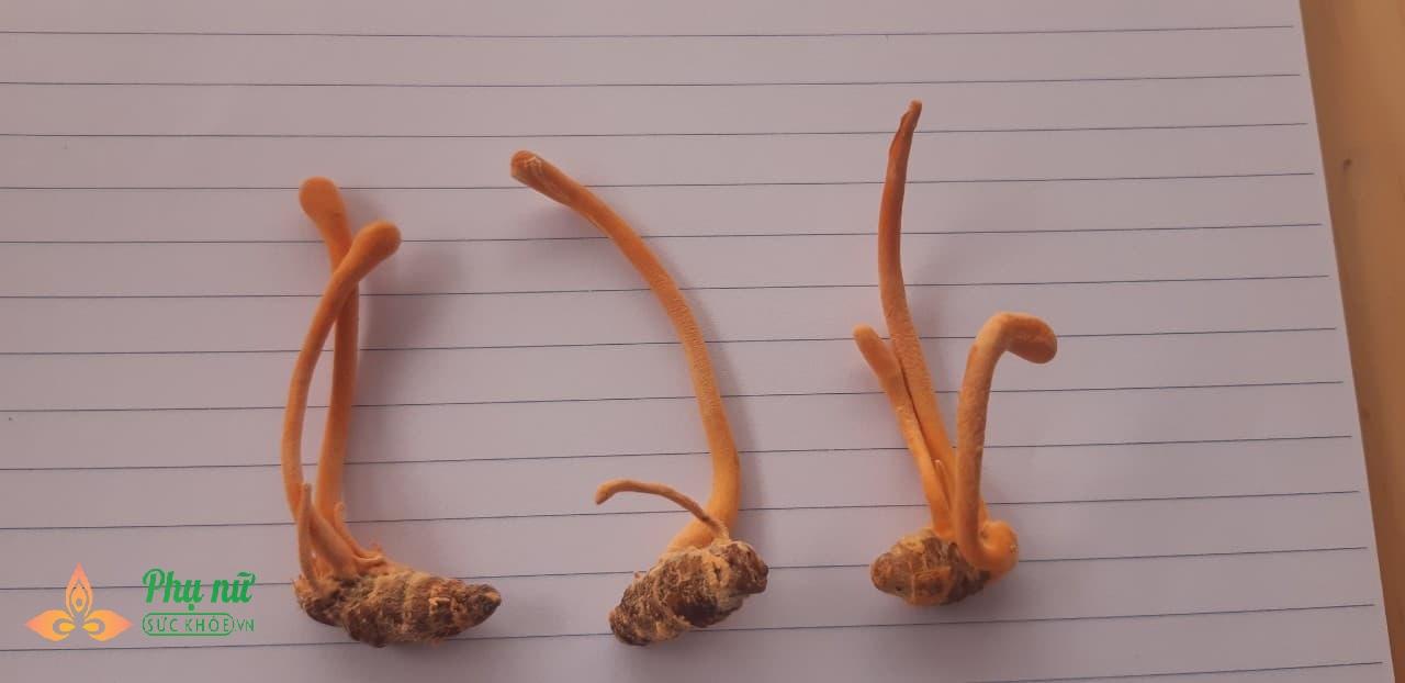 Đông trùng hạ thảo nuôi trồng: Mua hàng trôi nổi, nguy cơ nhiễm kim loại nặng (Kỳ 2) - Ảnh 2