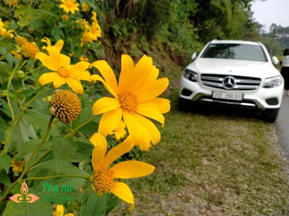 Hoa dã quỳ nở vàng rực sườn núi Ba Vì, giới trẻ nô nức lên 'sống ảo' khiến giao thông kẹt cứng - Ảnh 6