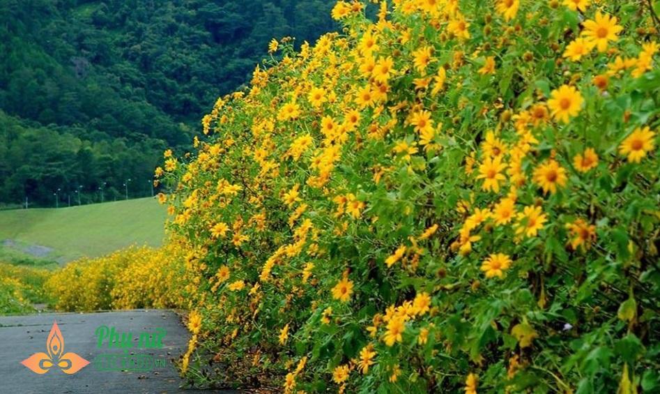 Hoa dã quỳ nở vàng rực sườn núi Ba Vì, giới trẻ nô nức lên 'sống ảo' khiến giao thông kẹt cứng - Ảnh 11