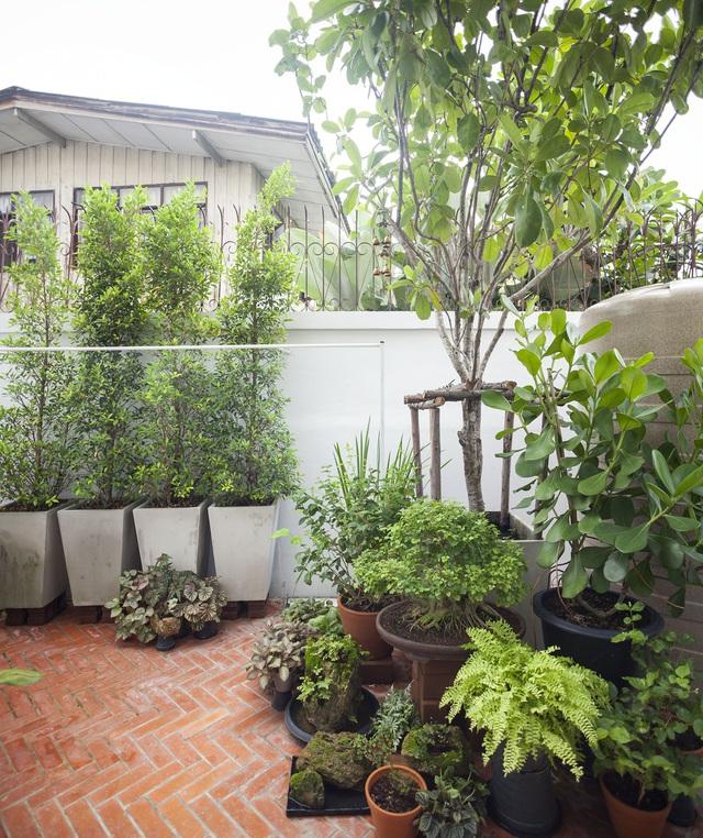 """Choáng ngợp ngôi nhà 300m2 với khu vườn bonsai toàn cây """"khủng"""" - Ảnh 5"""