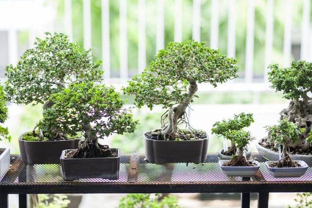 """Choáng ngợp ngôi nhà 300m2 với khu vườn bonsai toàn cây """"khủng"""" - Ảnh 8"""