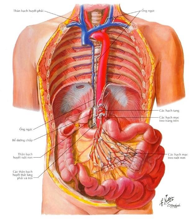 Căn bệnh hiếm khiến phổi bé trai chứa đầy dịch đục như sữa - Ảnh 2