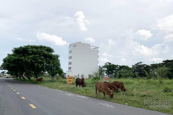 Chuyện lạ ở TP.HCM: Nơi giá đất 300 triệu đồng/m2, biệt thự xây dở không người ở - Ảnh 6