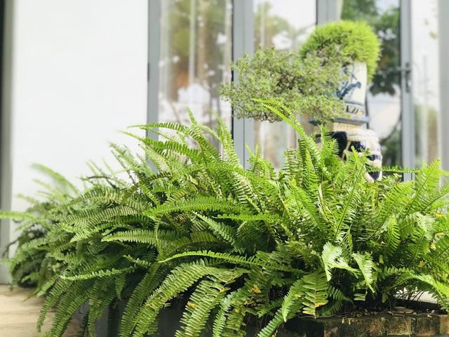 Chàng trai tự tay thiết kế nhà vườn 'vạn người mê' cho gia đình 4 thế hệ - Ảnh 4
