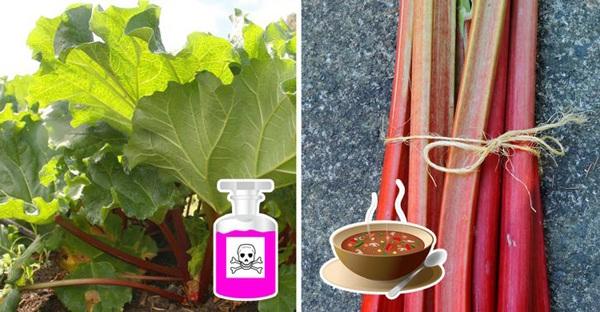 6 loại rau củ chứa đầy độc tố có thể gây ung thư, thiệt mạng nhưng nhiều người vẫn ăn - Ảnh 4
