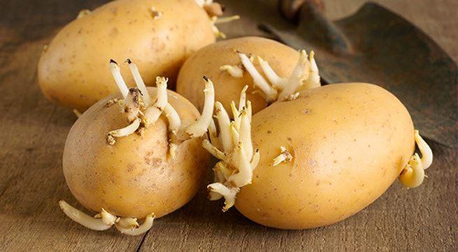 6 thực phẩm có độc chất bạn nên cẩn trọng khi chế biến - Ảnh 1