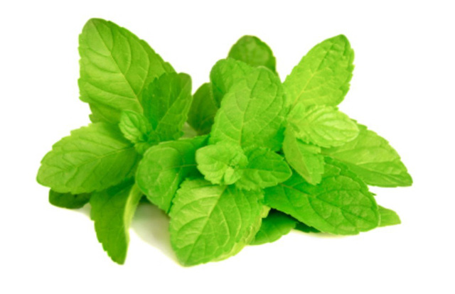 Những loại lá, quả và bài thuốc này làm hơi thở và miệng đều có mùi thơm dễ chịu - Ảnh 3