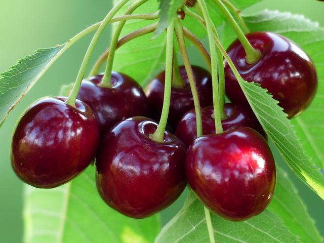 tac dung cua qua cherry 2