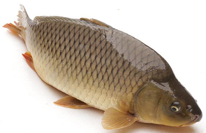 Thực hư việc bà bầu ăn 7-9 con cá chép, thai nhi thông minh hơn - Ảnh 1