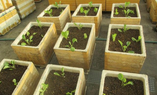 Trồng cây con là sự lựa chọn hoàn hảo khi bạn ngại chờ đợi và không có nhiều kinh nghiệm trồng hạt
