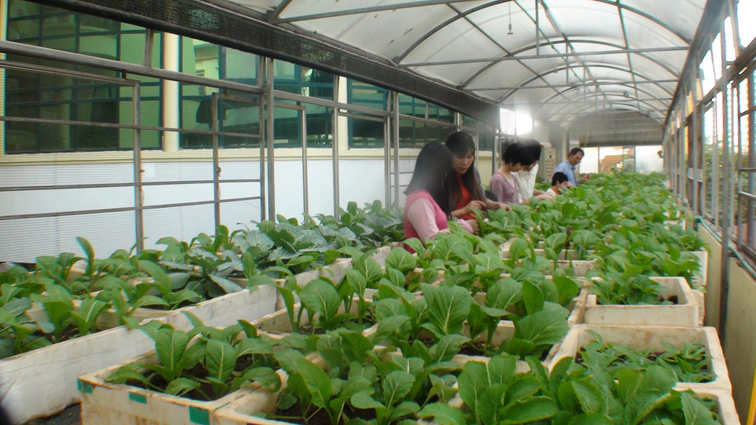 Mô hình trồng rau quả đặc chủng, đặc biệt thu hút sự chú ý và mở ra cơ hội kiếm tiền