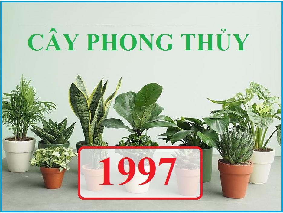 Gia chủ tuổi Đinh Sửu 1997 thuộc mệnh Thủy nên rất phù hợp với cây có màu xanh hoặc màu trắng