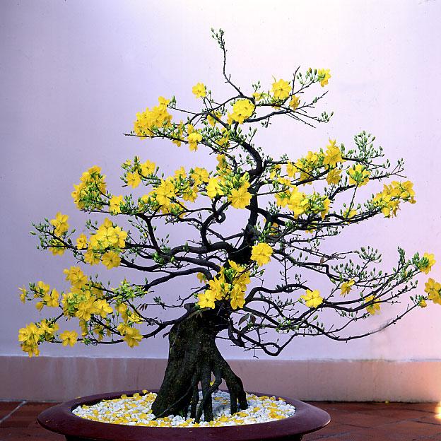 Hoa quả, cây cảnh chưng ngày Tết là những món quà sẽ gây được ấn tượng tốt cho người đem biếu